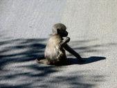 Little monkey — Stock Photo