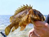 Trophy fish — Stock Photo
