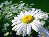 草原の花 — ストック写真