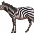 Animal zebra — Stock Photo #1970227