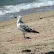 Seagull on sand — Stock Photo