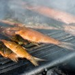 Homemade fish smoking — Stock Photo