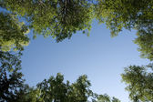 Trees around the sky — Stock Photo