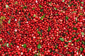 Fresh cowberry — Stock Photo