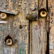 Stock Photo: Old wooden door with three bells