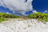 Wild beach — Stock Photo