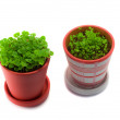 Garden pots plant - Stock Photo