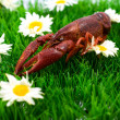 Crawfish/lobster - Stock Photo