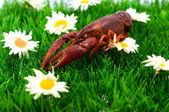 Crawfish/lobster — Stock Photo
