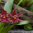 Spoted orchids - Stock Photo
