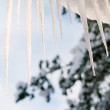 Dripping icicle - Stock Photo