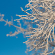 Photo: Frozen bush
