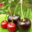 Sweet cherry — Stock Photo #1110197