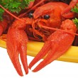 Crayfish - Stock Photo