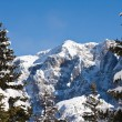 Stock Photo: Spruce and mountain