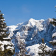 Stockfoto: Spruce and mountain