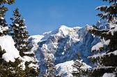 Ladin ve dağ — Stok fotoğraf