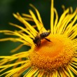 Stock Photo: Flower and bee