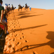 Camel caravan going through the sand — Stock Photo #1188895