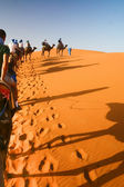 Camel caravan going through the sand — Stock Photo