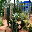 Stock Photo: Jardine Majorelle in Marrakesh, Morocco