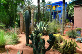 Jardine Majorelle in Marrakesh, Morocco — Stock Photo
