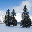 Spruce and mountain — Stock Photo #1270307