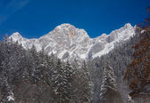 View to the Dachstein. Austria — Stock Photo
