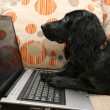 Dog Russian Spaniel and laptop. — Stock Photo