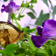 Stock Photo: Exotic butterfly