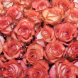 Bed of roses — Foto de Stock