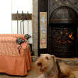 Stock Photo: Dog sit near fireplace