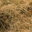 Hay — Stock Photo #1193246