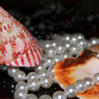 Foto de Stock  : Mussels and pearls
