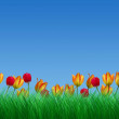 Stock Photo: Green grass and tulips blue sky