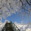 Stock Photo: Ladderto sky