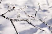 Trees in snow — Stock Photo