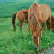 Постер, плакат: Horse family pastures in a meadow