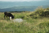 Dark brown horse in highlands — Stock Photo
