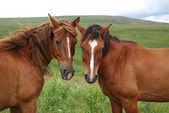 Horse family portrait — Stock Photo