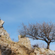 Tree on the hill — Stok fotoğraf