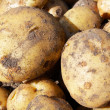 Raw new potatoes — Stock Photo