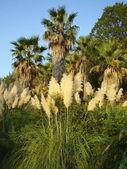 Sotsji arboretum — Stockfoto