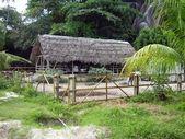 Horse Farm in Seychelles — Stock Photo