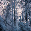 Winter morning — Stockfoto
