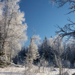Glade in a winter forest — Stock Photo