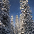 Stock Photo: Winter wilderness
