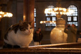 Cat in Hagia Sophia, Istanbul — Stock Photo