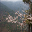 Spring flowers in Himalayas, Nepal - Stock Photo