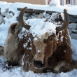 Himalayan yak after a snowfall, Nepal — Stock Photo
